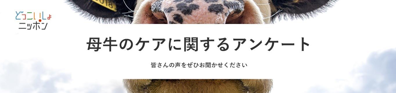 母牛のケアに関するアンケート