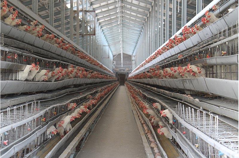 北坂養鶏場の養鶏場