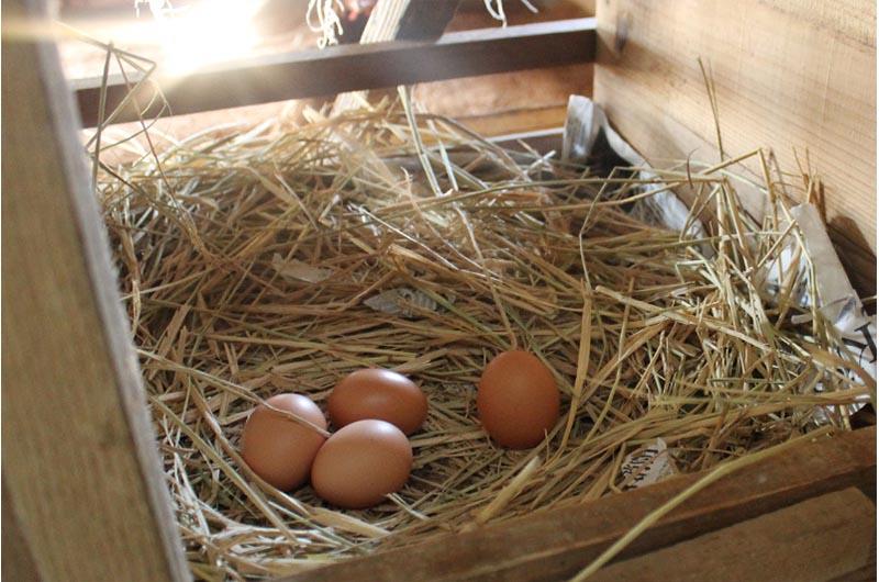 北坂養鶏場の卵