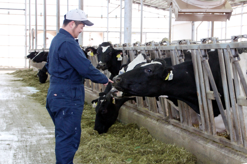 箸荷牧場の代表である今中さんと牛