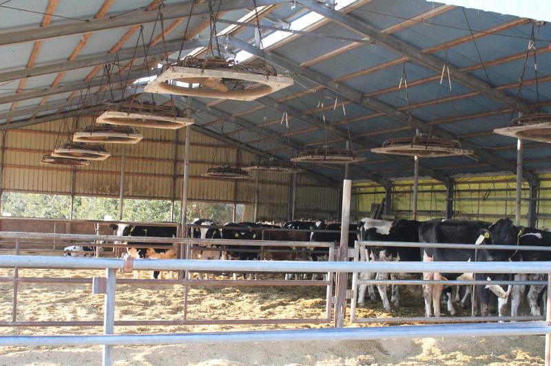 宇畑牧場の牛舎