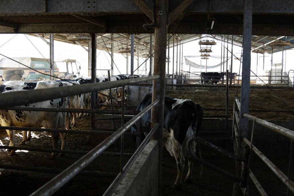 木目澤牧場の牛舎