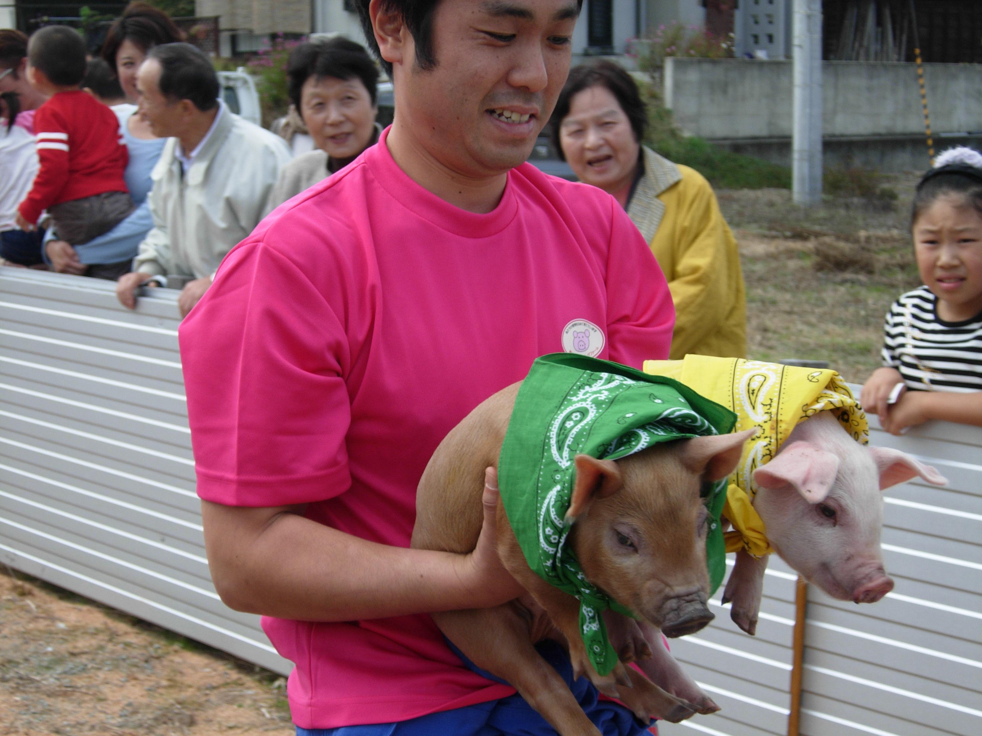 豚二匹を運ぶスタッフさん