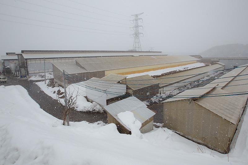 雪に覆われた松山農場