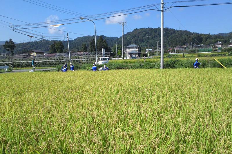 山形産のお米