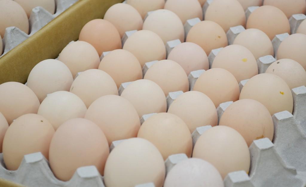 香川ランチグループの卵