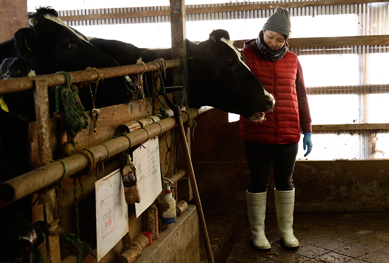 木目澤牧場の初実さんと牛