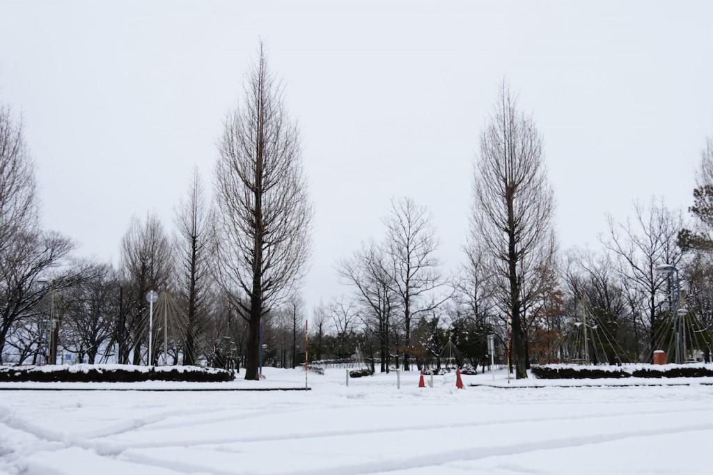新潟県新潟市南区の白根の雪景色