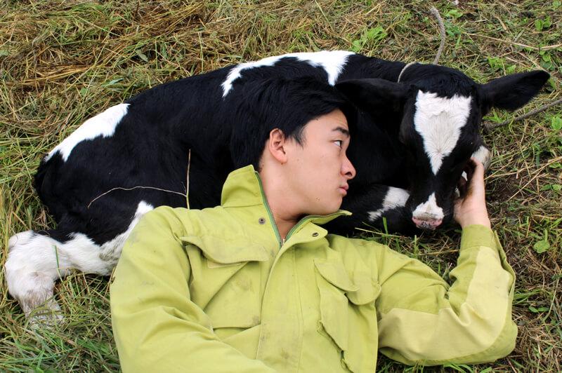 ましこ牧場の牛と小林さん