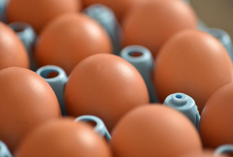 倉持産業株式会社で採れた卵