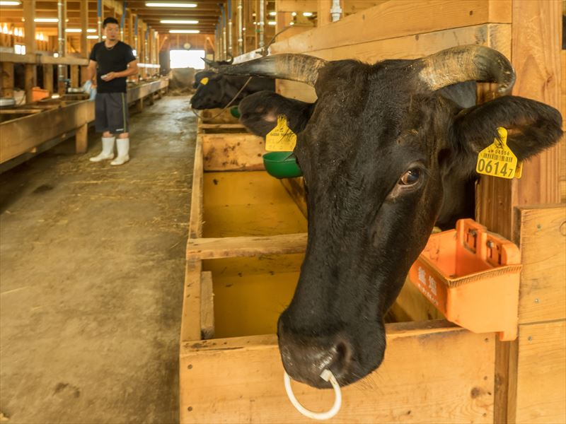 株式会社KANEHOの牛