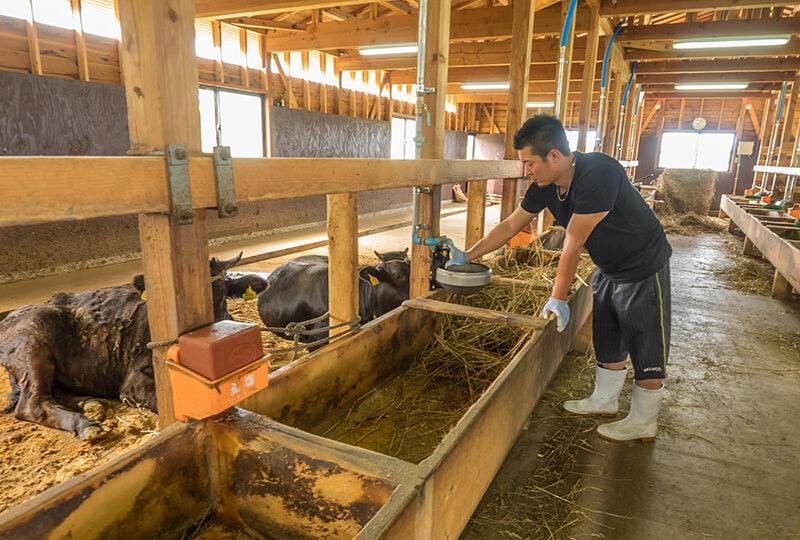 株式会社KANEHOの牛舎