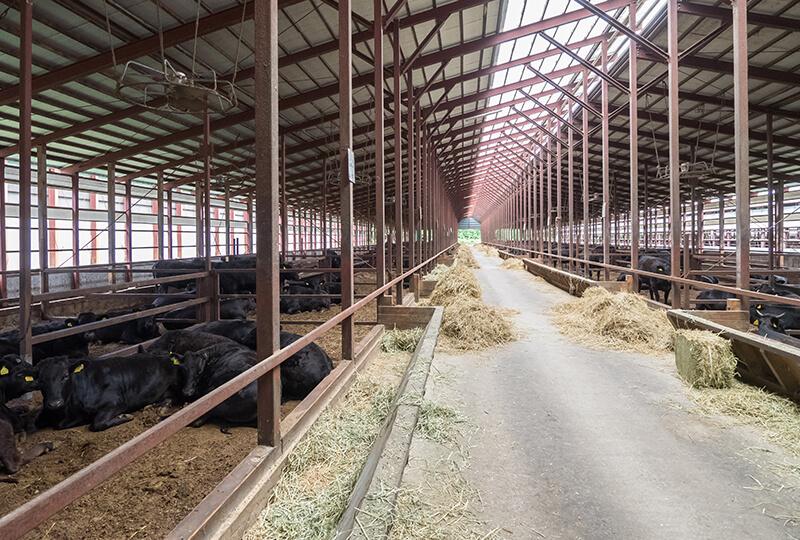 金子ファームの牛舎