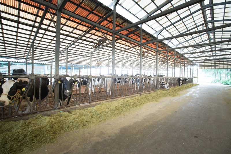 那須高原「今牧場」の牛舎