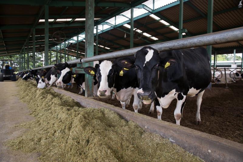 今牧場の牛舎