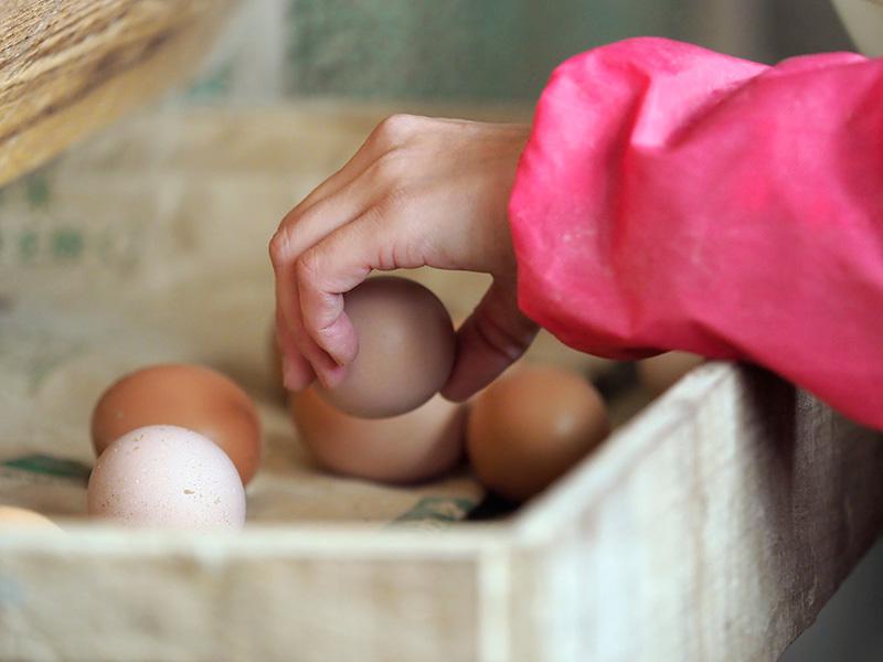 カヤニファームの鶏が産んだ卵