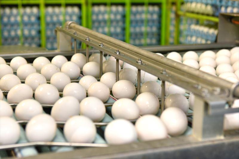 倉持産業の工場の別室に運ばれる卵