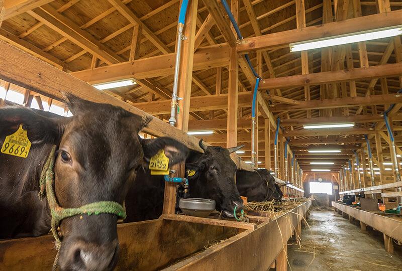 KANEHOの牛舎