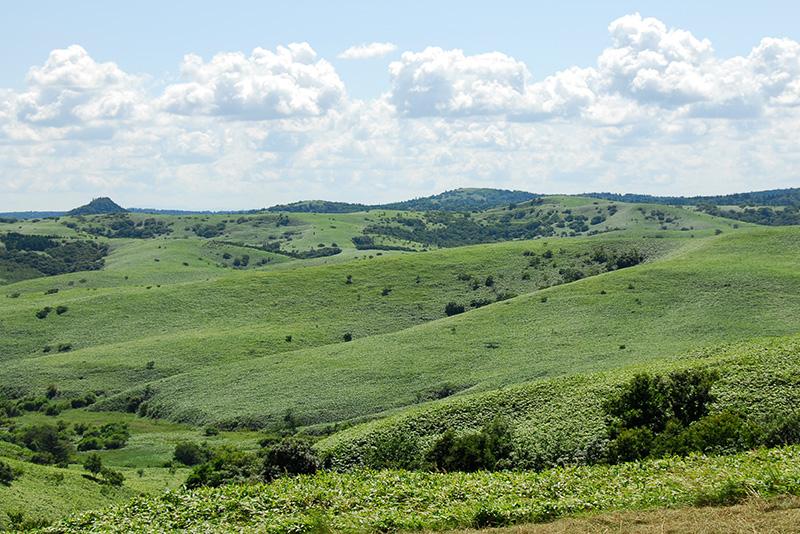 宗谷岬牧場の牧草地