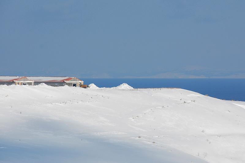 雪に包まれた宗谷岬牧場