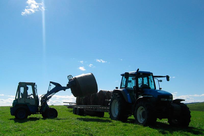 宗谷岬牧場の作業風景