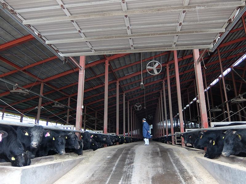 宗谷岬牧場の牛舎
