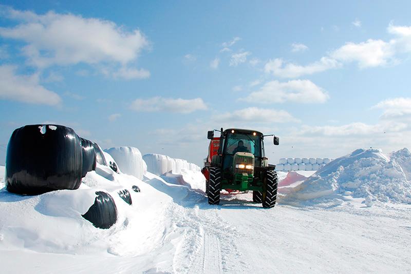 宗谷岬牧場の冬