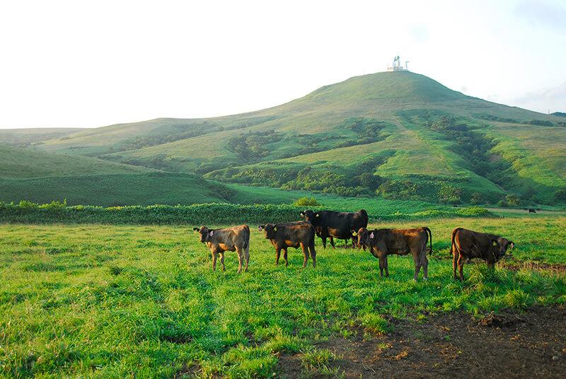 宗谷岬牧場の夏の風景