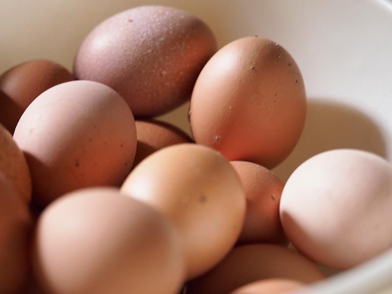カヤニファームで採れた卵