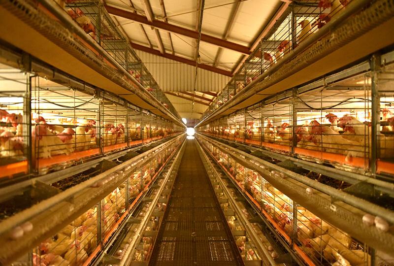 倉持産業の鶏舎