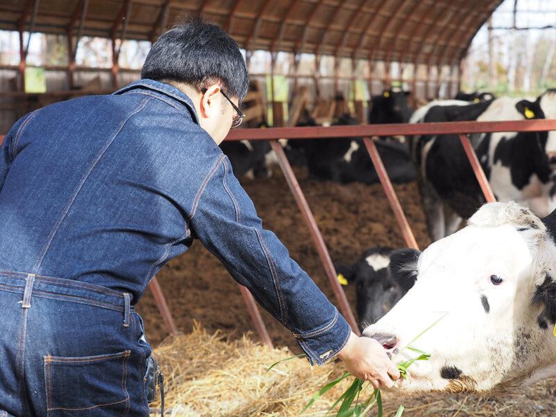 牛に餌をあげる十勝スロウフードの藤田さん