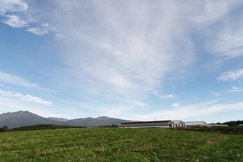 広大な藤井牧場