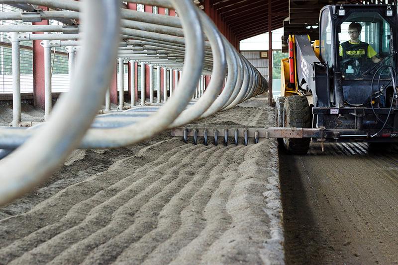藤井牧場、砂の牛床