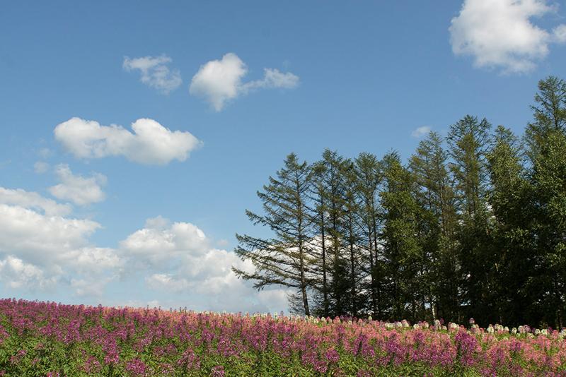 藤井牧場、富良野の自然
