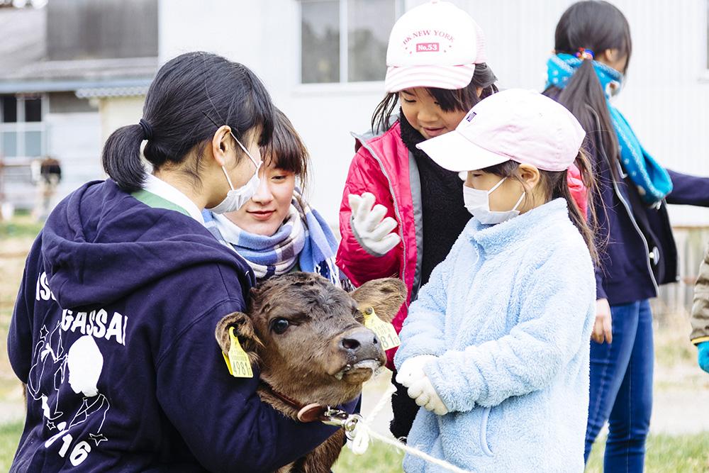 モーモースクール子牛とのふれあい体験