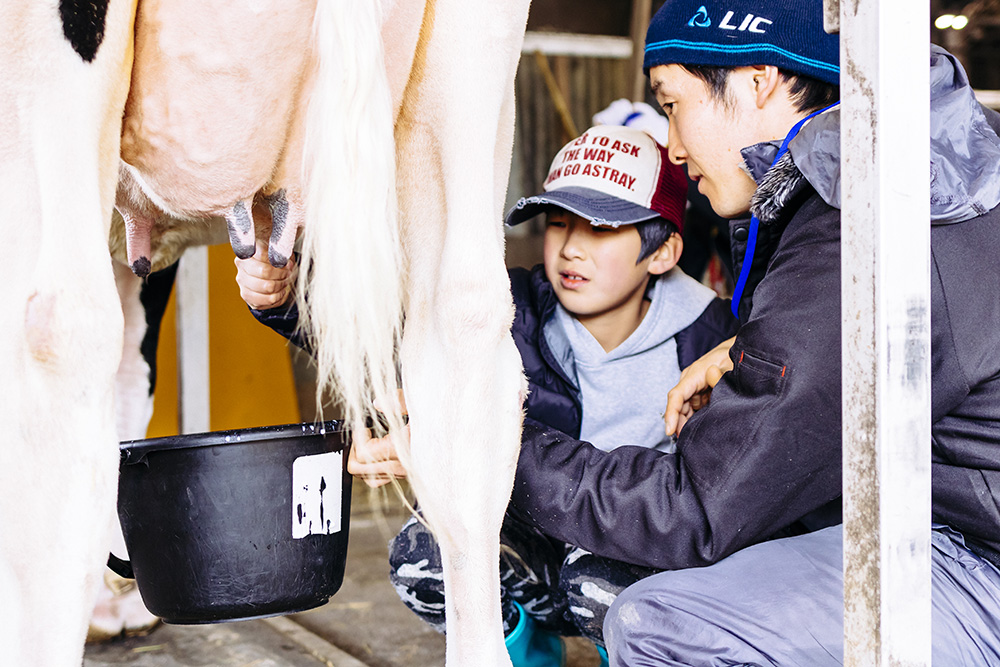 牛の乳搾りをする子ども