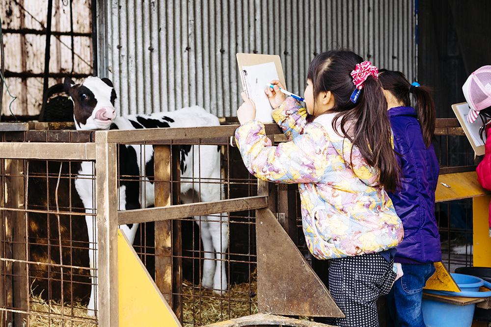 牛のスケッチをする女の子