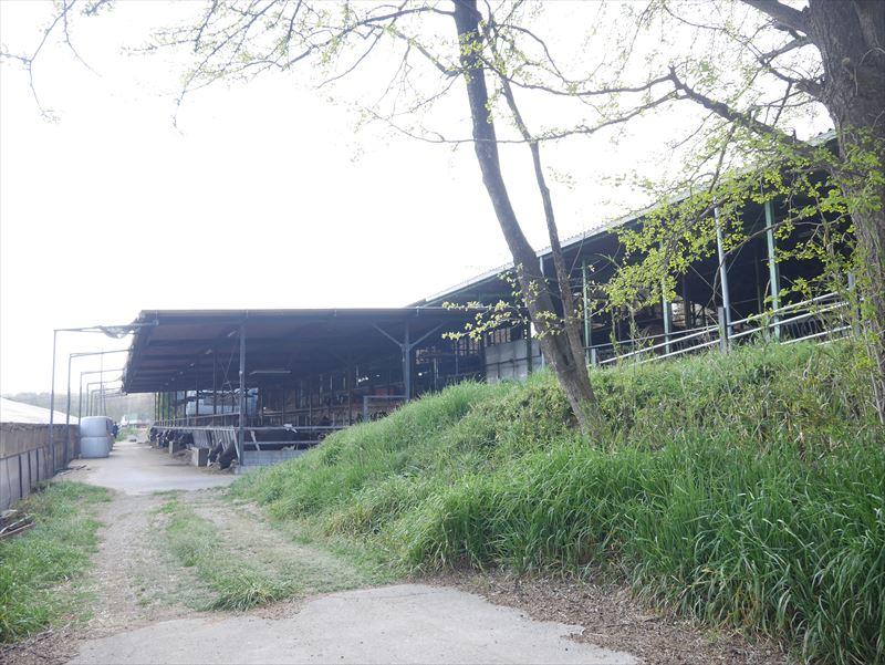 廣澤さんが新設した牛舎