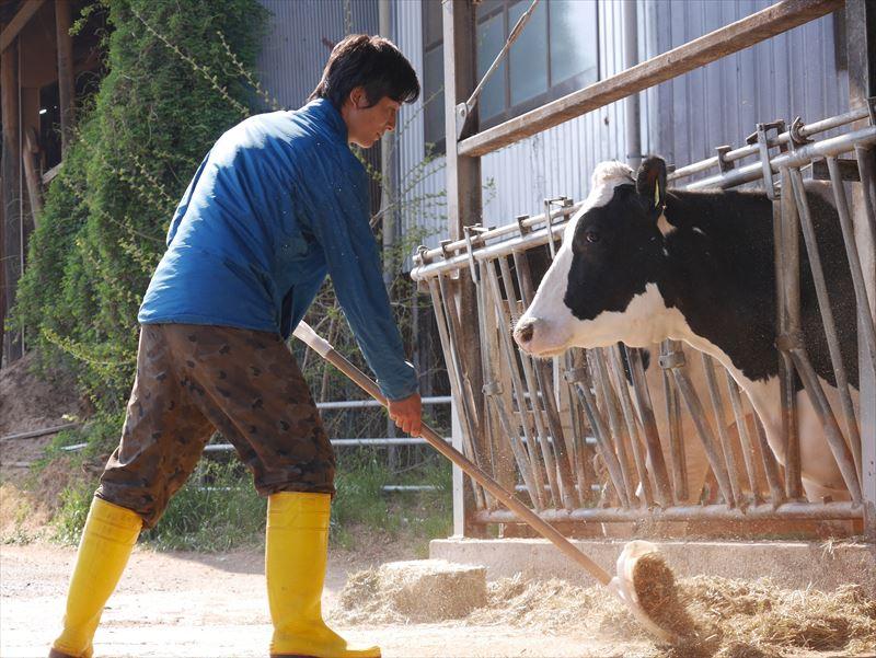 牛舎の掃除をする廣澤さん