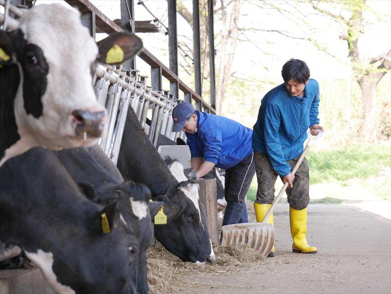 牛舎の掃除をする廣澤さんとスタッフ