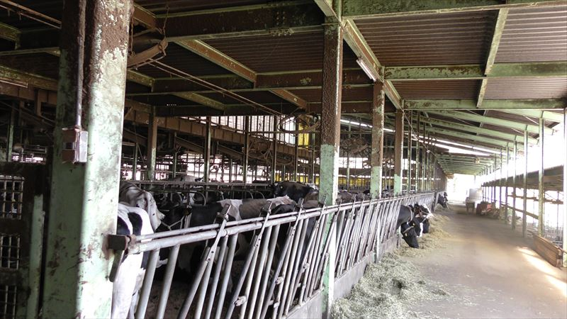グローリーデイリーファーム牛舎