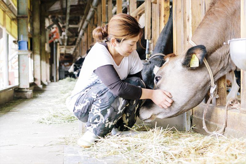 牛の世話をする従業員女性