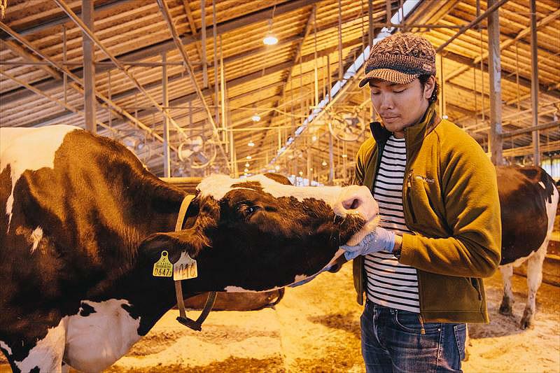 牛の世話をする純さん