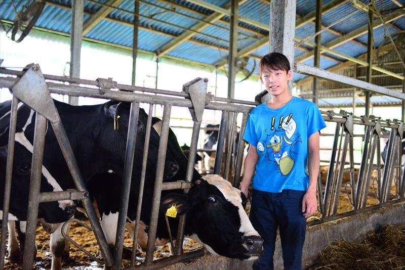 牧場の研修生と牛