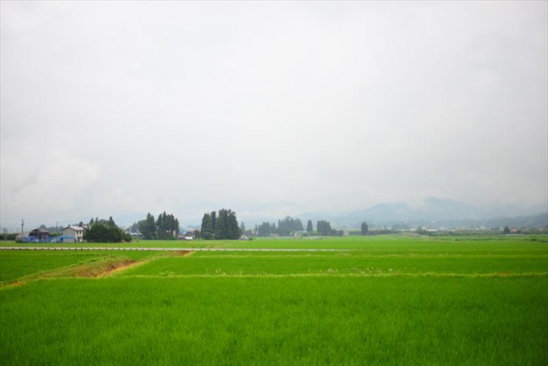 広大な自然と牧場風景