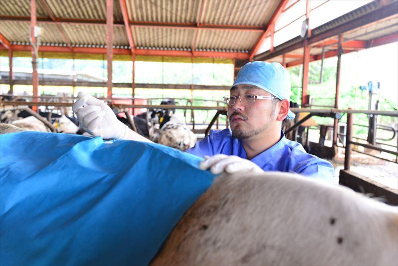牛に注射をする原田先生