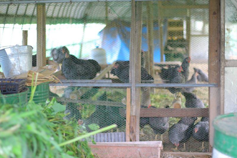 大野村農園の鶏舎