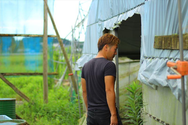 鶏の様子を見る大野村農園・菊池さん