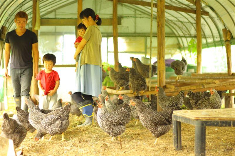 大野村農園の鶏舎の様子
