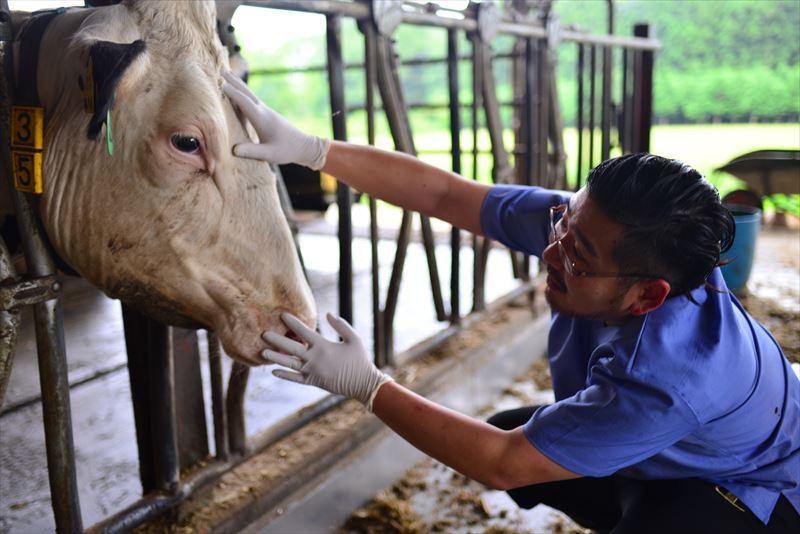 牛の様子を見る原田先生